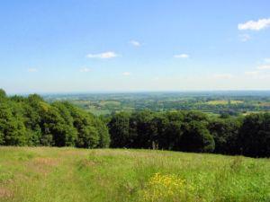 Old Storridge Common