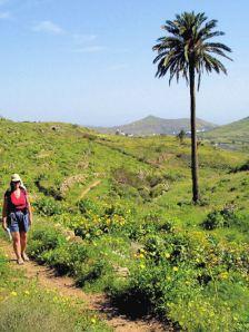 The Haria region, Lanzarote