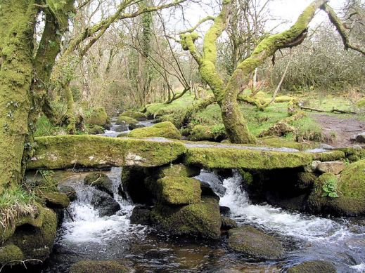 Dartmeet stepping stones