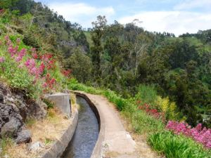 Levada Nova, Madeira (Walk 73)